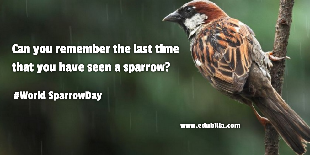 23/58/world-sparrow-day-2017.png