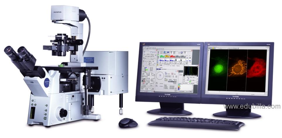 confocalmicroscopy3.png