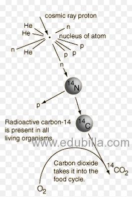 carbon141.png