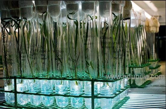 tissueculture2.png
