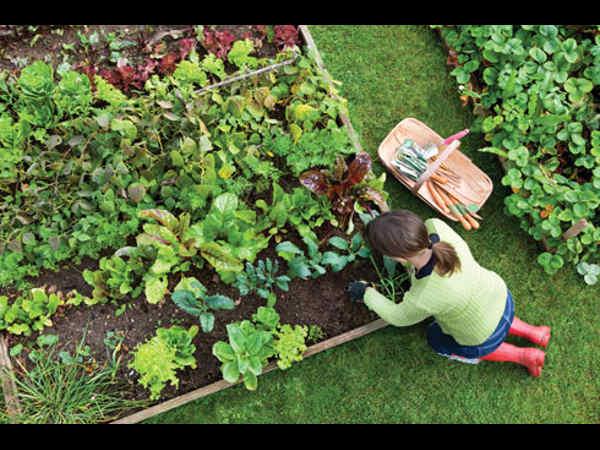 52/eb/horticulture-university-in-haryana.jpg